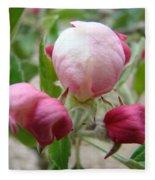 Apple Blossom Buds Art Prints Spring Baslee Troutman Fleece Blanket