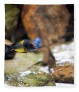 Aquarium Fish At Stones Arrangement Fleece Blanket