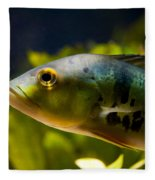 Aquarium Striped Fish Portrait Fleece Blanket