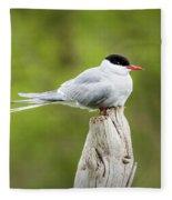 Arctic Tern Fleece Blanket