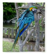 Arent I A Handsome Fellow - Blue And Gold Macaw Fleece Blanket