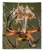 Argiope Spider Wrapping A Hornet Fleece Blanket