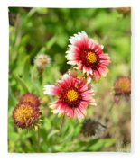 Arizona Sun Blanket Flowers Fleece Blanket