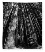 Armstrong National Park Redwoods Filtered Sun Black And White Fleece Blanket