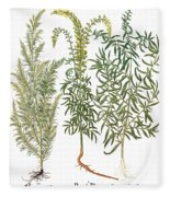 Artemisiae & Reseda Fleece Blanket