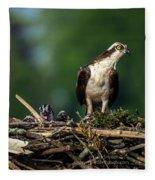 Osprey Family Night Fleece Blanket