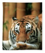 Asian Tiger 5 Fleece Blanket