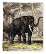 Asiatic Elephant With Young, 19th Fleece Blanket