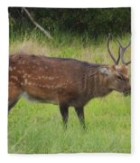 Assateague Sitka Deer Fleece Blanket