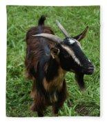 Attractive Goat Standing In A Grass Field On A Farm Fleece Blanket