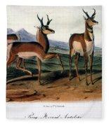 Audubon: Antelope, 1846 Fleece Blanket