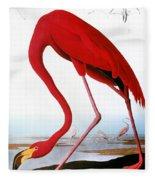 Audubon: Flamingo, 1827 Fleece Blanket