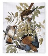 Audubon: Kestrel, 1827 Fleece Blanket