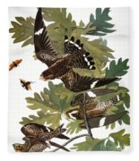 Audubon: Nighthawk Fleece Blanket