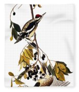 Audubon Sapsucker, 1827-38 Fleece Blanket