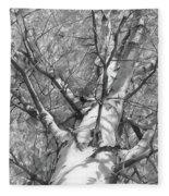 Autumn Birch Fleece Blanket