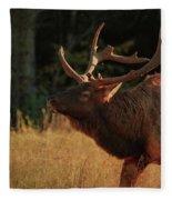 Autumn Elk In Cataloochee Valley Textured Fleece Blanket