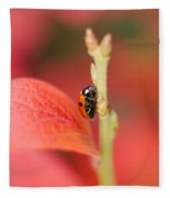 Autumn Ladybird Fleece Blanket