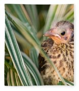 Baby Bird Peering Out Fleece Blanket