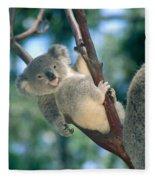 Baby Koala Bear Fleece Blanket