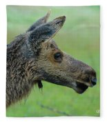 Baby Moose With Dew Fleece Blanket