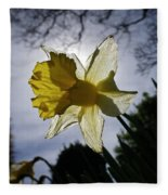 Backlit Daffodil Fleece Blanket