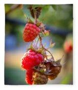 Backyard Garden Series - The Freshest Raspberries Fleece Blanket