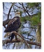 Bald Eagle By H H Photography Of Florida Fleece Blanket