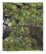 Bald Eagle In A Pine Tree, No. 4 Fleece Blanket