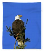 Bald Eagle On Blue Fleece Blanket