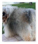 ball of fur Havanese dog Fleece Blanket