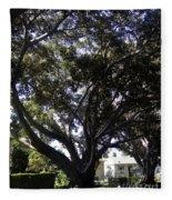 Baobab Trees In Los Angeles Fleece Blanket
