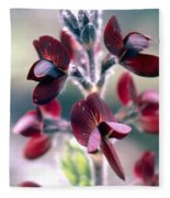 Barbed Thermopsis Or Black Pea Fleece Blanket