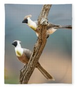 Bare-faced Go-away-birds Corythaixoides Fleece Blanket