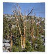 Bare Trees Fleece Blanket