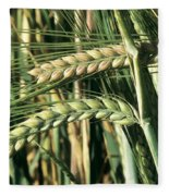 Barley, Green Stage Fleece Blanket