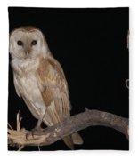 Barn Owl Tyto Alba Fleece Blanket