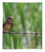 Barn Swallow Fleece Blanket