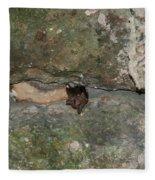 Bats Inside The Pyramid At Grupo Nohoch Mul At The Coba Ruins  Fleece Blanket