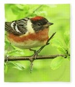 Bay-breasted Warbler Fleece Blanket