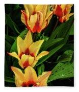 Beautiful Bicolor Tulips Fleece Blanket