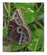 Beautiful Blue Morpho Butterfly Resting In A Garden  Fleece Blanket
