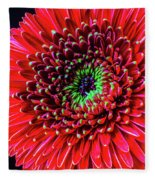 Beautiful Details Of Gerbera Daisy Fleece Blanket