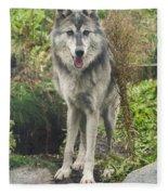 Beautiful Gray Wolf Fleece Blanket
