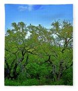 Beautiful Texas View 2 Fleece Blanket