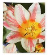 Beautiful Tulip With A Yellow Center And Pink Striped Petals Fleece Blanket