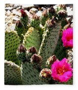 Beavertail Cactus Fleece Blanket