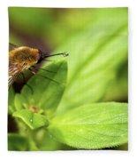 Beefly Fleece Blanket