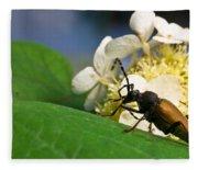 Beetle Preening Fleece Blanket