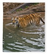 Bengal Tiger Wading Stream Fleece Blanket